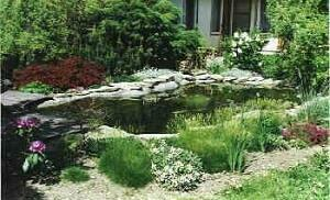 Garden ponds for ornamental fish for Ornamental fish pond design